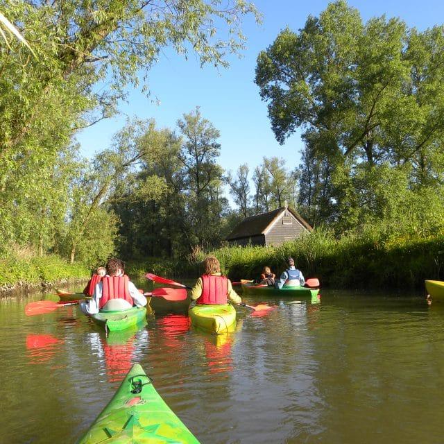 Kano groep excursie Biesbosch Dordrecht