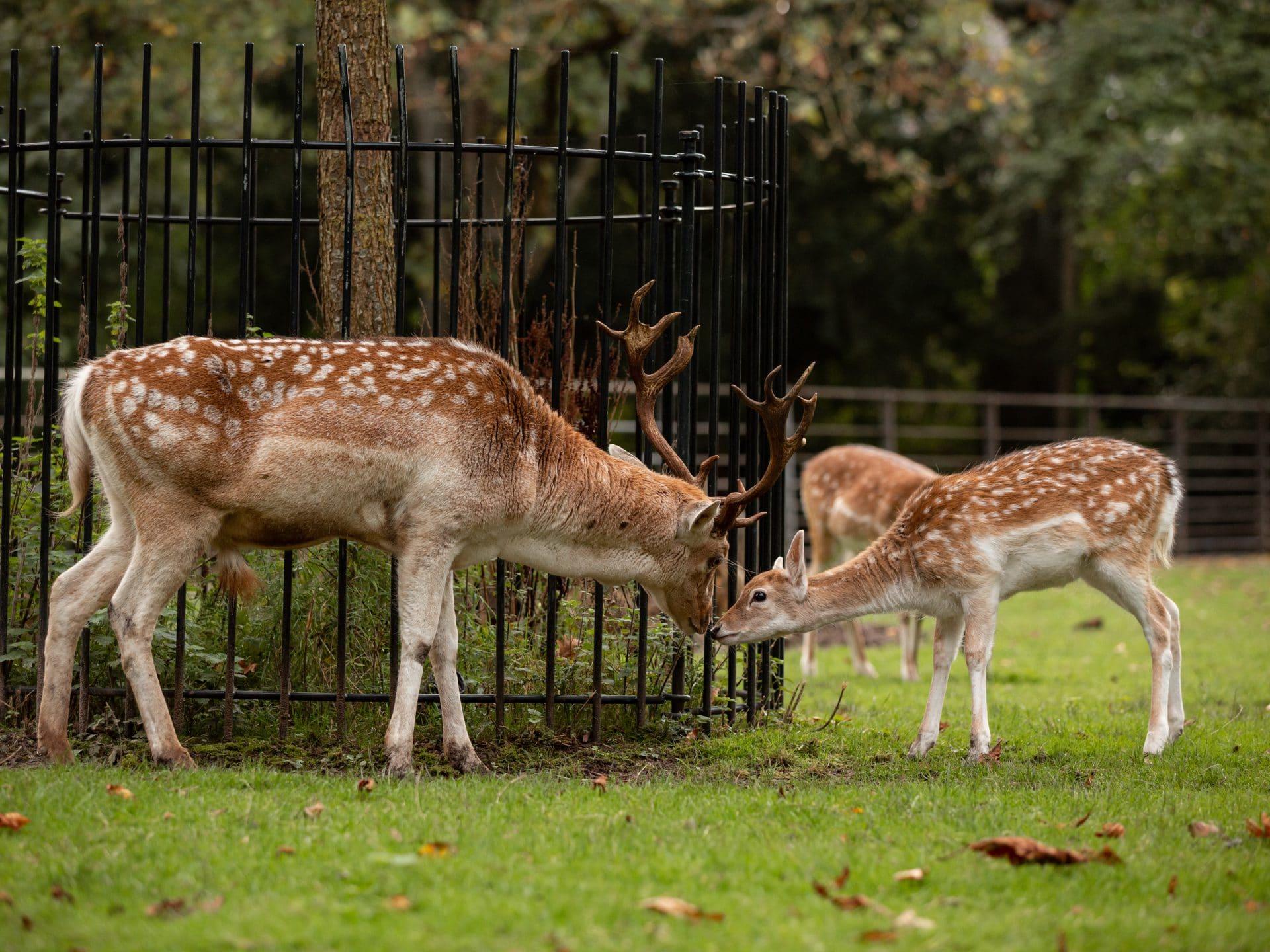Park Merwestein - Dordrecht